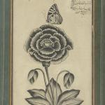 Shafi' Abbasi, Flower and a Butterfly, 1655 CE, Safavid, Yale University Art Gallery