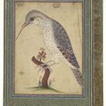 Ali Naqi, Wryneck on a Branch, 1700–1701, Safavid, Yale University Art Gallery